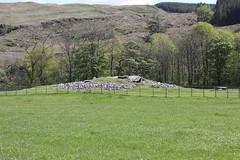 Nether Largie South Cairn (D R Swift) Tags: cairn prehistoric neolithic bronzeage burialmound kilmartin netherlargiesouthcairn argyle scotland