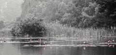 Nenufares B/N (rraass70) Tags: canon d700 retoques rio agua ninbinh deltadelriorojo vietnam