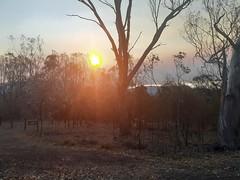 Smokey afternoon (Luke6876) Tags: tenterfield newsouthwales australia park trees nature sky clouds afternoon smoke fire