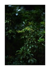 This work is 13/15 works taken on 2019/9/27 (shin ikegami) Tags: sony ilce7m2 a7ii sonycamera 50mm lomography lomoartlens newjupiter3 tokyo 単焦点 iso800 ndfilter light shadow 自然 nature naturephotography 玉ボケ bokeh depthoffield art artphotography japan earth asia portrait portraitphotography