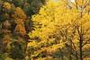 Autumn colors in nature (Teruhide Tomori) Tags: nature landscape gifu okuhida hirayu mountain autumn tree forest japan japon 平湯温泉 奥飛騨 秋 自然 森 山 樹 広葉樹 日本 岐阜県 風景 紅葉 安房峠
