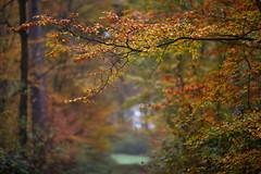 Regentage (geraldtourniaire) Tags: eos6d ef 20 135l natur nature herbst wald