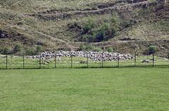 Nether Largie Mid Cairn (D R Swift) Tags: prehistoric bronzeage burialmound cairn kilmartin netherlargemidcairn argyle scotland