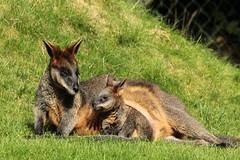 Mother and child Walibi (K.Verhulst) Tags: walibi blijdorp rotterdam diergaarde