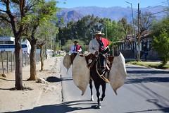 Engalanados (pepelara56) Tags: gauchos gaucho salta guardamontes caballos