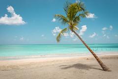 Maragogi (marcelo.guerra.fotos) Tags: maragogi beach brasil brazil clouds detail coconut palm blue paradise madive