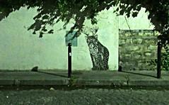 La nuit parfois certains chats sont verts (Robert Saucier) Tags: paris pavement mur wall streetart nuit night nightshot noflash vert green stencil arbre tree trottoir sidewalk img1305