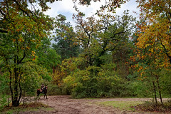 Chanfroy plain (hbensliman.free.fr) Tags: travel autumn nature forest france fontainebleau pentax pentaxart