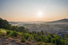 Morning in the vines (ZeGaby) Tags: champagne landscape leverdesoleil marne naturephotography paysage paysagedechampagne pentax2470mm pentaxk1 sunrise vines vineyards avenayvaldor france
