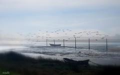Misty along the river (Armelle85) Tags: extérieur paysage nature lagune rivière mouettes bateau barque brume brouillard ciel portugal obidos oiseau