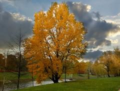 Autumn (Jurek.P2 - new account) Tags: jesień autumn park citypark kępapotocka trees colours sonya77 jurekp2 warsaw warszawa