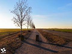 Stage 16 San Nicolás del Real Camino-Reliegos French Way | Way of Saint James (asanza23n) Tags: french way saint james the pilgrim pilgrims palencia león camino de santiago frances