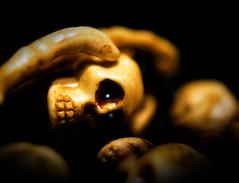Flickr Friday- Des os - Bones (Jean-Pierre Bérubé) Tags: flickrfriday desos bones jeanpierrebérubé jpdu12 nikon d5300 os tête head squelette skeleton bracelet halloween