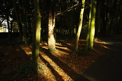 Autumn Sunlight (janpaulkelly) Tags: autumn sunlight trees parks park nature outside gardens garden walkways pathways shadows