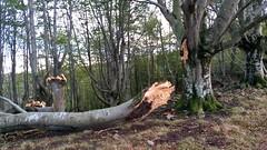 Efecto del viento de ayer (eitb.eus) Tags: eitbcom 26743 g1 tiemponaturaleza tiempon2019 monte bizkaia orozko arantzasanpedro