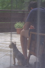 Summer Memory (sárkánymacska) Tags: summer nyár hungary magyarország terasz dog kutya fotel curtain függöny zuikoautos50mm12 fujixt20