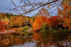 Herbst im Westpark (Jutta Achrainer) Tags: achrainerjutta münchen westpark sonyalpha7riii fe24–70mmf28gm see laub herbst bunt