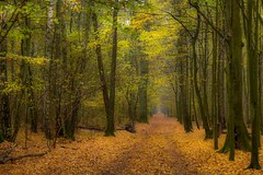 the forest falls asleep (adenkis) Tags: autumn mood forest trees path route