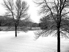 Stark contrast to yesterday (novice09) Tags: snow trees view blackandwhite monochrome ipiccy