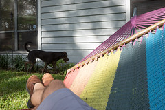 Hunting Lizards (SReed99342) Tags: florida jacksonville queens dog me legs hammock
