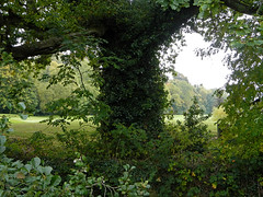 An ivy-covered tree in Cahir Park, Ireland (albatz) Tags: green ivycovered tree cahir park ireland