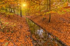 Beekbergen - Vrijenbergspreng (Rob Kints (Robk1964)) Tags: 2017 deposbank arnhem autumn beekbergenhoenderlo dieren foliage heath heather heide nederland netherlands rheden