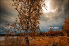 Birke im Herbstwind (linke64) Tags: thüringen deutschland germany gras natur landschaft himmel wolken wolkenhimmel herbst bäume baum birke wolkenbild
