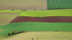 View from Desenberg (buidl-lemmy) Tags: felder meadows warburg warburgerbörde rinder cattle transporter van green braun grün herbst autumn fall germany landscape landschaft