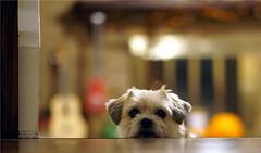 A Shot of Rex (Fojo1) Tags: candidphotography color pets dogs selectivefocus bukeh bokeh