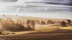 30102016-DSC_0295 (vidjanma) Tags: tronle arbres automne brume chemin matin