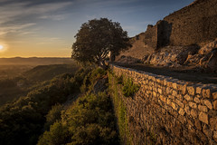 A tree in a wall (cliveg004) Tags: banne auvergnerhonealpes france sunrise dawn ardeche sky clouds nikon d7500 tamron1024 trees fort walls valley hills vineyards