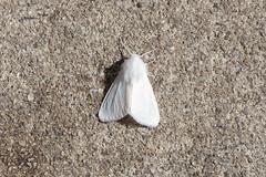 Moth (SReed99342) Tags: florida jacksonville moth