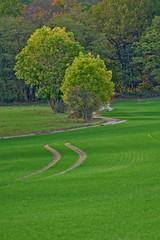 Trails (pstenzel71) Tags: deutschland feld rudolstadt landschaft field thüringen thuringia darktable autumn fall herbst