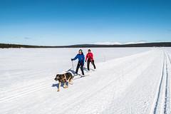 with a dog (ikkasj) Tags: winter finland lapland landscape muonio snow