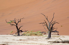 Südliches Afrika - September 2019 (O!i aus F) Tags: afrika namibia osm k5 wüste namib sand urlaub k7