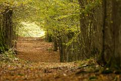 Un chemin dans la forêt d'orient (Glc PHOTOs) Tags: 20191104122532glc4010nikond500600mmdxo glcphotos nikon d500 dx 209mpixel tamron sp 150600mm f563 di vc usd g2 tamronsp150600mmf563divcusdg2 a022