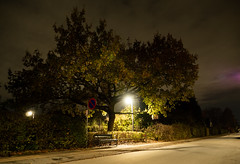 I like this Oak (where Juno meets Aurora) (2) (bohelsted) Tags: tree night oak suburban streetlights lowkey 1260 rødovre varioelmarit leicadg em5markii
