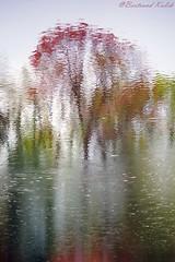 Toile d'automne, aquarelle (bertrand kulik) Tags: abstract water abstrait reflection reflect reflet nature automne france waer eau bourgogne