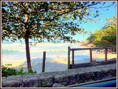 Sem título (o.dirce) Tags: árvore natureza nature paisagem mar rua dirce odirce