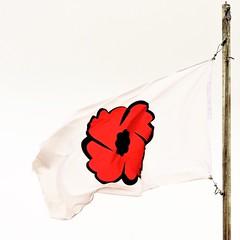 Poppy flag; lest we forget... (Will S.) Tags: memorial branch 631 royalcanadianlegion ontario canada bay flag kingston poppy remembrance collins mypics legion lestweforget remembrancedaycaptainmatthewjdawememorialbranch631 captaindawe collinsbay