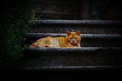 Lui è. Lui è il gatto. E dentro di lui fluisce lo stesso sangue di una tigre. (ornella sartore) Tags: gatto scalini sguardo colori allaperto dettagli felino