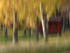 Autumn (evisdotter) Tags: autumn höst colors färger trees träd light nature sooc icm intentionalcameramovement abstract grönauddenscamping mariehamn