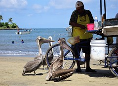 Fish Heads (knightbefore_99) Tags: rincon guayabitos mexico mexican sunny sun sol beach playa plant west coast pacific ocean awesome nayarit fish cart waiting pelican bird