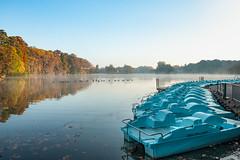 (Laetitia.p_lyon) Tags: fujifilmxt2 lyon parcdelatêtedor lac lake reflet reflection automne autumn fall