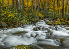Fall on the Middle Prong Trail (Bernie Kasper (6 million views)) Tags: art berniekasper color colour creek d750 effect family fall fun gsmnp greatsmokymountainnationalpark greatsmokymountains hiking light landscape love leaves leaf longexposure nature nikon naturephotography new nikkor national outdoors outdoor old outside photography park photos plants people raw river travel trail trees tree tennesse unitedstates usa cascade rock