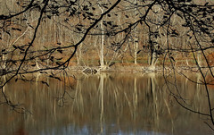 River Reflections (Diane Marshman) Tags: susquehanna river water fall autumn season reflections reflecting tree trees leaves branches weeds brush nature pa pennsylvania state