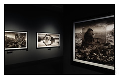 In The National Museum of Finland (Eline Lyng) Tags: helsinki helsingfors thenationalmuseumoffinland finland nickbrandt inheritthedust exhibition art africa photography animal wildanimal leica q leicaq 28mm artphotography