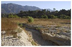Hahamongna_0303 (Thomas Willard) Tags: hahamongna chaparral flats california foothills flood plain plants sangabriel pasadena mountains park watershed arroyoseco