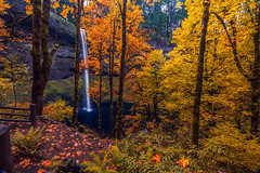 South Falls - Silver Falls State Park in Autumn (Cole Chase Photography) Tags: silverfalls autumncolors fallcolors fall waterfall pacificnorthwest oregon
