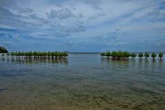 Mangroves (agasfer) Tags: 2019 fiji beqa blr pentax k3 sigma1020 topaz adjust5 sky clouds